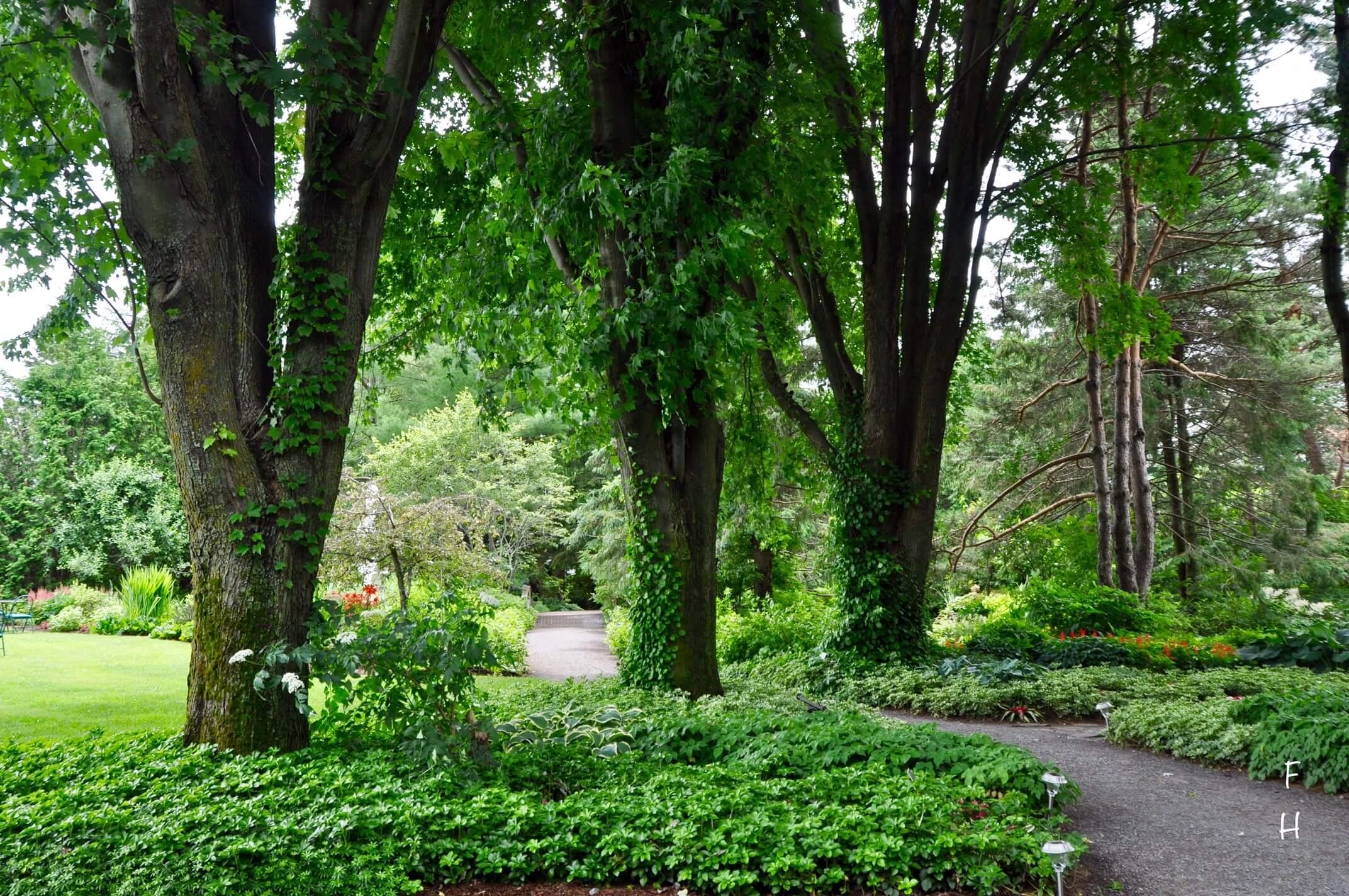 Sentier du jardin anglais