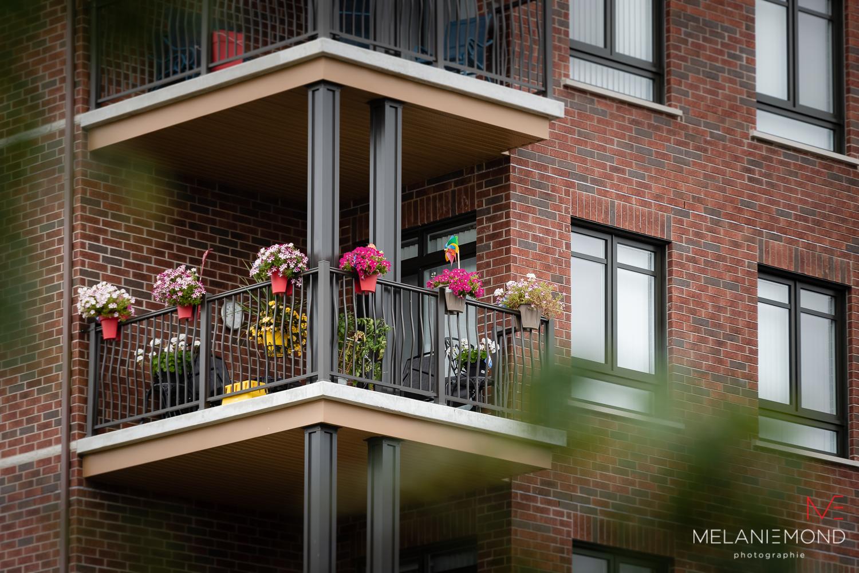Balcon fleuri - 1er prix